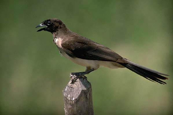 Birds Of Consejo Belize There Are Over 320 Bird Species