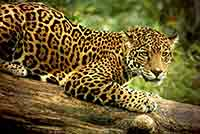 Wildlife of Belize