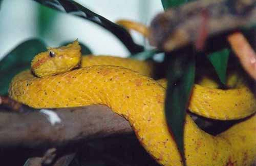 Dangerous Snakes of Belize: 8 Snakes Found in Belize Are